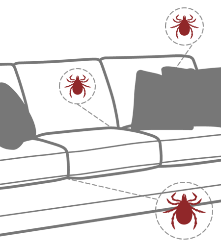 Brown dog ticks can reproduce indoors in large numbers typically on sofas and beds.