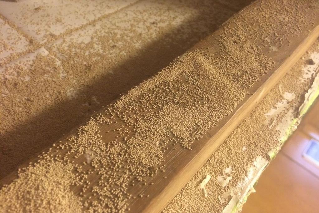Termite faecal pellets