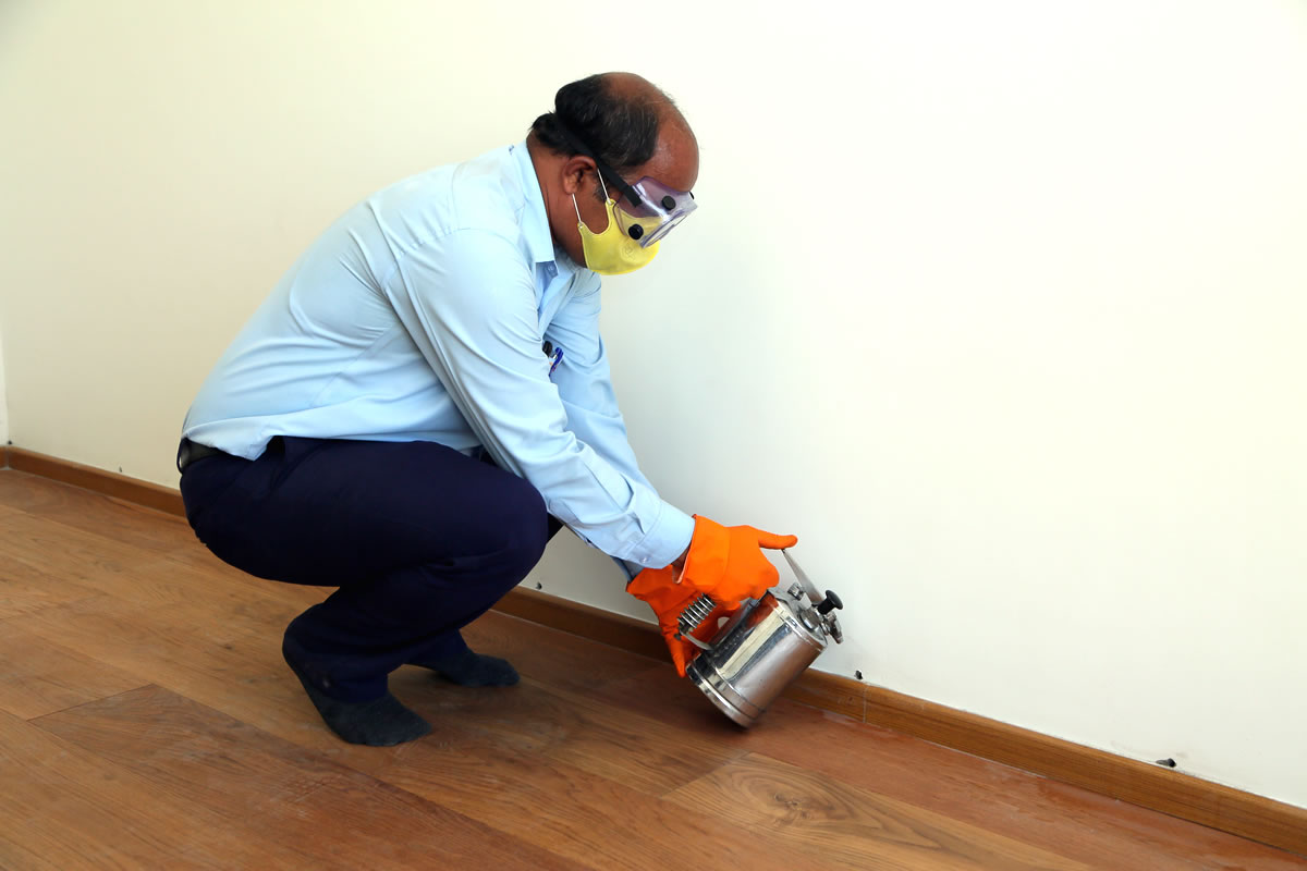 Wooden Flooring Anti Termite Treatment